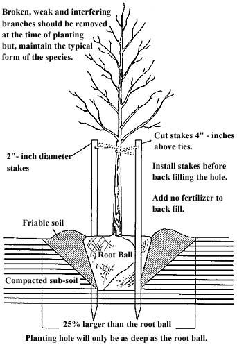 Saratoga Tree Service Planting